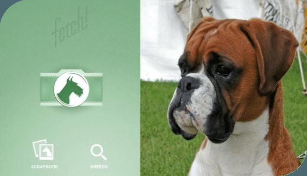 ¿Cual es la raza de tu perro Con esta App puedes saberlo?