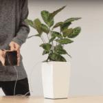 El mercado de FOREX cargar tu teléfono con una Planta