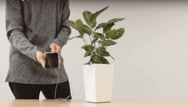 cargar tu teléfono con una Planta